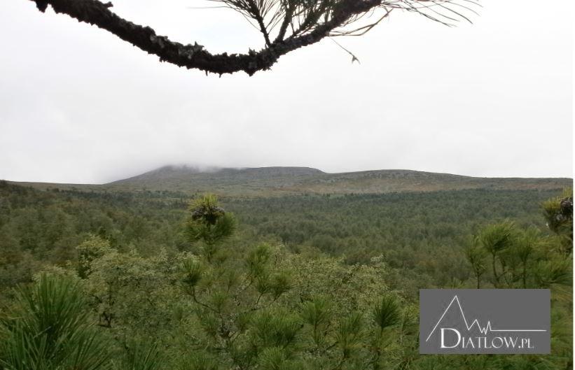 Przełęcz Diatłowa, widok zeszczytu cedru